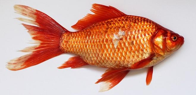 মাছ সম্পর্কে স্বপ্ন - ব্যাখ্যা এবং অর্থ
