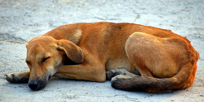 Unistused pruuni koera kohta - tõlgendamine ja tähendus